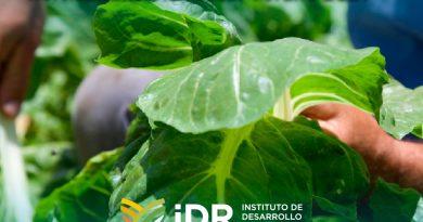 El IDR hizo un diagnóstico sobre el uso de buenas prácticas agrícolas en la horticultura mendocina